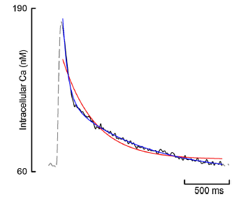 Excel用作细胞内钙瞬态的多元回归分析
